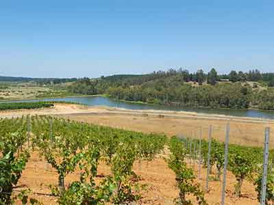 Wijnvelden van Santa Carolina