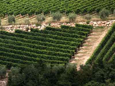Wijngaarden van de familie Zenato in Noord-Italië