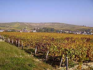 Wijnvelden rond Bué - Sancerre Rouge – Domaine Salmon