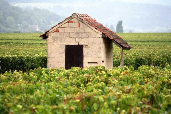 Duurste wijnen ter werels