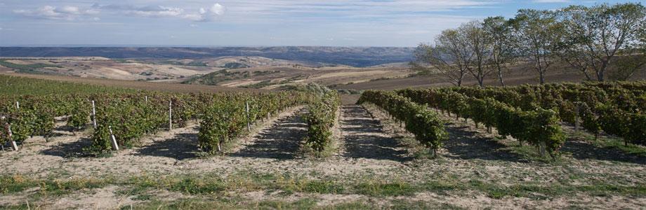 Wijnhuis Vigneti del Vulture: Pipoli Basilcata Rosato